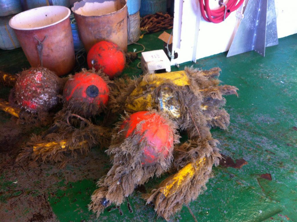 Acoutic Release Biofouling Buoys